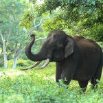 Koundinya Wildlife Sanctuary: An exotic trip to lush greenery