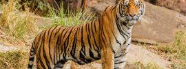 Kawal-Tiger-Reserve