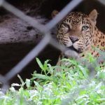 Trivandrum Zoo – Visit and enjoy yourself with your family.